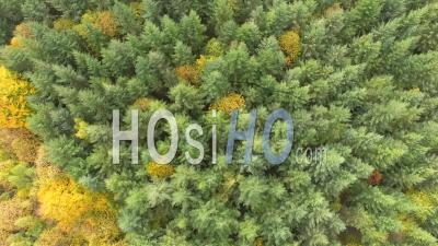 Forest Of Fir Trees In Isere, France – Aerial Video Drone Footage