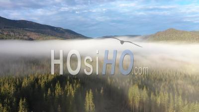 Survoler Misty Forest - Vidéo Drone