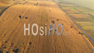 Champ De Plantation Prêt Pour La Récolte - Vidéo Drone