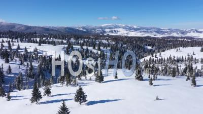 Snow Covered Fir Trees And Mountains - Video Drone Footage