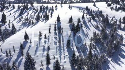 Above Snow Covered Fir Trees - Video Drone Footage