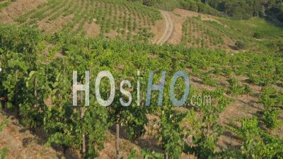 Banyuls-Sur-Mer, Viewed From Vineyard - Video Drone Footage
