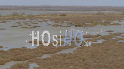 Flamingo In Swamp Of Saintes-Maries-De-La-Mer Viewed From Drone