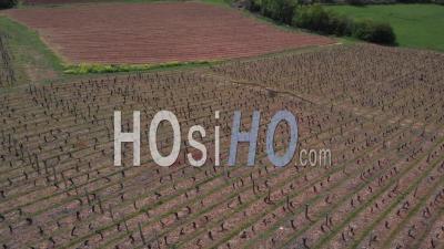 Vineyards In Beaujolais Region - Video Drone Footage