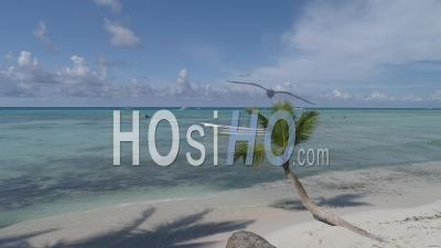 Boat In Saona Island - Video Drone Footage