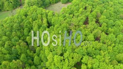 Forêt De Hêtres Primaires - Vidéo Drone