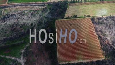 La Londe Les Maures, Forêt Incendiée Et Vignes – Vidéo Drone