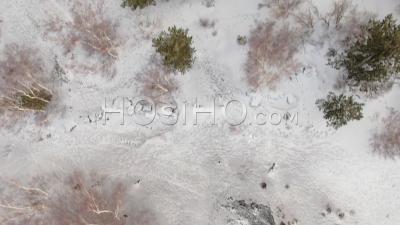 Vue Aérienne Au-Dessus Des Arbres Et De La Neige Sur Le Mont Etna (sicile), Le Plus Grand Volcan D'europe - Vidéo Drone