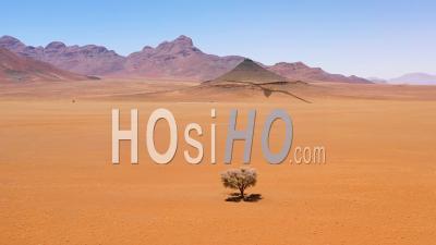 Vue Aérienne D'un Seul Arbre Solitaire Assis Au Milieu Du Désert Du Namib, Namibie - Vidéo Drone