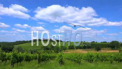 Nuages Blancs Passant Sur Le Vignoble De Bordeaux - Timelapse