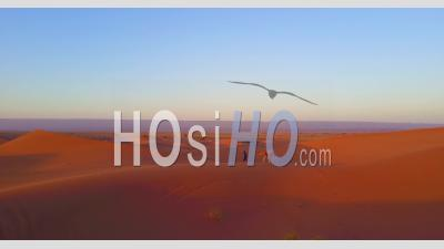 Aerial View Over A Man Leading His Camel Across Desert Sand Dunes At Sunrise In Morocco - Video Drone Footage