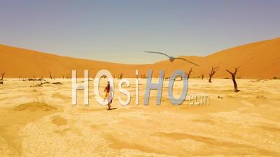 Aerial View Following A Woman Running Near Dead Trees At Sossusvlei Desert Sand Dunes In The Namib Desert, Namibia, Africa - Drone Point Of View