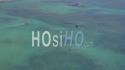 Aerial View Over Dolphin Swimming Center At Punta Cana In The Dominican Republic - Video Drone Footage