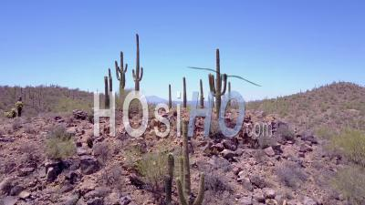 Aerial View Over Desert Cactus In Saguaro National Park Near Tucson, Arizona - Video Drone Footage