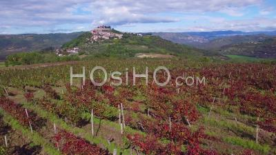 Aerial View Of A Small Croatian Or Italian Hill Town Or Village With Vineyards Foreground - Video Drone Footage