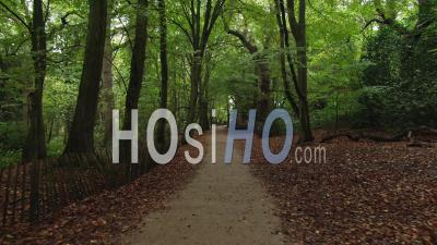 A Path In A Forest In Autumn - Video Drone Footage