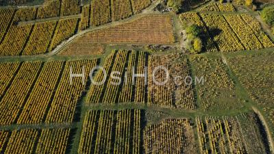 Autumn Vines, Video Drone Footage