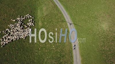 Route Saint-Jacques De Compostela, Troupeau De Moutons Et Randonneurs, France - Vu Du Drone