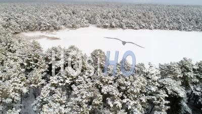 Forêt De Pins Recouverte De Neige Avec Un Lac Gelé, Suède - Vidéo Drone