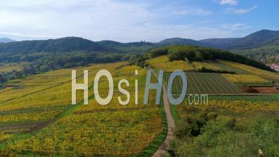 Village Alsacien Entouré De Vignobles, Alsace, France - Vidéo Drone