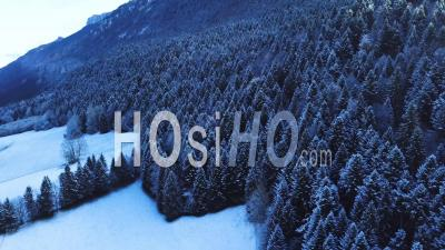 Forest Under Snow, Savoy, France, Video Drone Footage