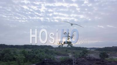 Vue Aérienne D'un Arbre Dans La Forêt Amazonienne Avec Des Rondins Autour