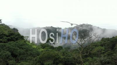 Vol Dans La Canopée De La Forêt Tropicale Vidéo Drone