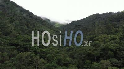 Flight Over The Rain Forest Canopy - Video Drone Footage
