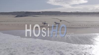 Femme Au Galop Avec Ses Deux Chevaux Sur Une Plage Avec Les Dunes En Arrière-Plan Vu Par L'océan - Vidéo Aérienne Par Drone