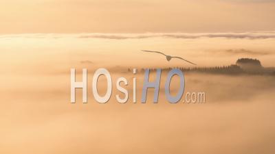 Timelapse De Brouillard Sur Les Arbres Et Les Rochers Des Monts D'arree