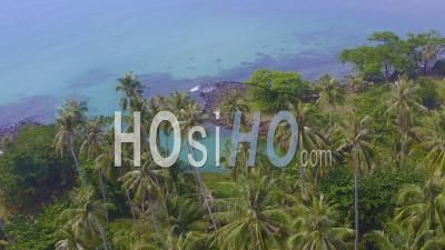 Coconut Trees At A River Mouth On Koh Mak - Video Drone Footage