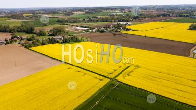 Aerial View Of Fields Of Colza - Aerial Photography