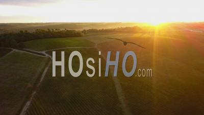 Sunrise On Vineyard And Landscape, Video Drone Footage