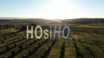 Grazing Light Dusk Over Vinyards - Video Drone Footage
