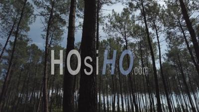 Vue Aérienne De Pins Au Printemps, Sol Forestier Couvert De Fougères - Vidéo Par Drone