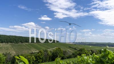 Chablis Vineyard, Bourgogne-Franche-Comte, France