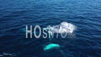 Vue Aérienne Des Baleines à Punta Cana - Vidéo Par Drone