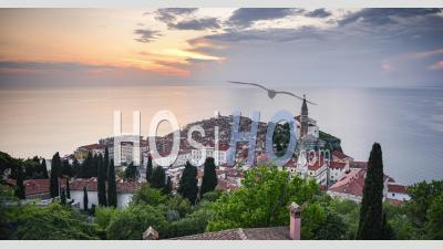 Timelapse Of Slovenia At Piran Old Town With Mediterranean Sea And Traditional Red Rooftops. Elevated Time Lapse View Of Slovenian Coast Scenery At Sunset