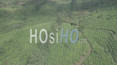 Paysage De Plantation De Thé Dans Les Montagnes De Munnar, Inde. Vidéo Aérienne Par Drone
