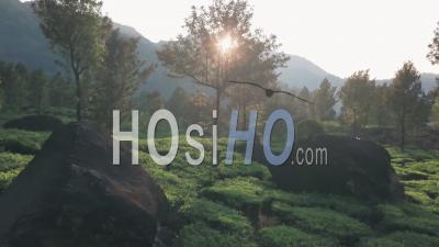 Vue Aérienne Par Drone Vue Des Rayons Du Soleil à Travers Les Arbres Sur Les Plantations De Thé Dans Les Collines, Au Lever Du Soleil, Kerala, Inde