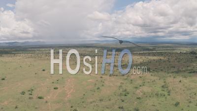 Paysage De Savane Africaine Et De Plaines à Laikipia, Kenya. Vidéo Aérienne Par Drone