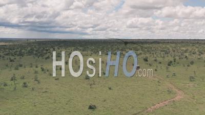 Safari Game Drive à Laikipia, Kenya. Vue Aérienne Par Drone Après La Conduite à 4 Roues Motrices à Travers Le Paysage De La Savane Africaine.