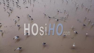 Asian Openbill Are Highly Social And Form Large Group - Video Drone Footage