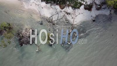 Looking Down Dry Bare Mangrove Trees And White Sand - Video Drone Footage