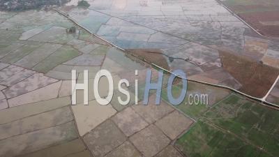 Vue Aérienne Du Champ De Riz Paddy - Vidéo Drone