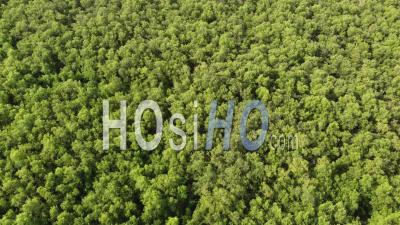 Aerial View Abundant Of Mangrove Trees - Video Drone Footage