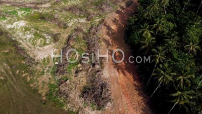 Aerial Look Down Dry Oil Palm Tree Beside Coconut Palm Tree - Video Drone Footage