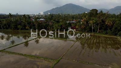 Aerial View Flood Season At Paddy Field - Video Drone Footage