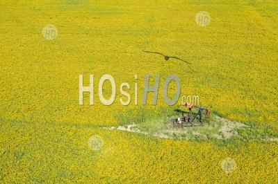 Old Oil Well In Soybean Field - Aerial Photography