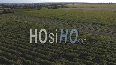 Grape Harvest At A Vineyard In Anjou, France – Aerial Video Drone Footage